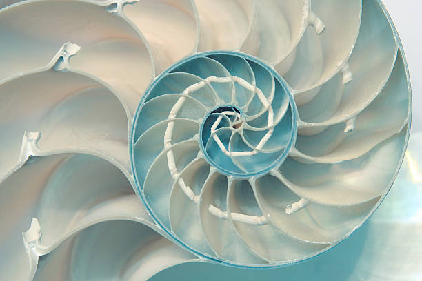 nautilus - nautilus stock pictures, royalty-free photos & images
