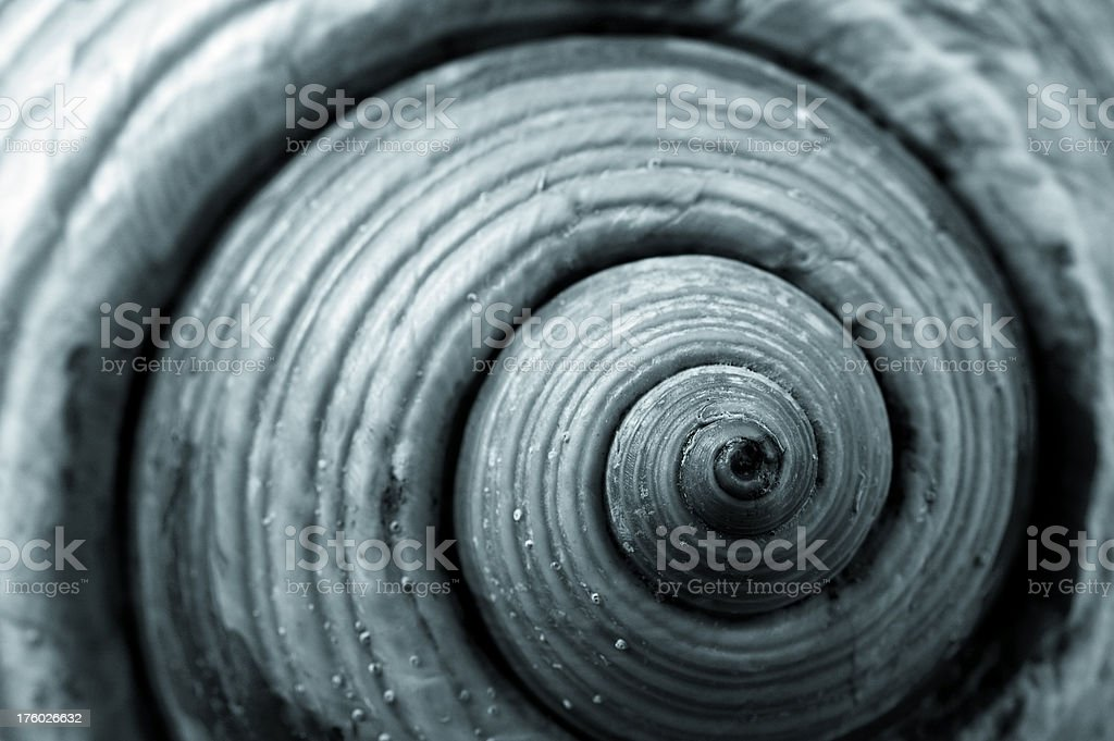 Nautilus stock photo