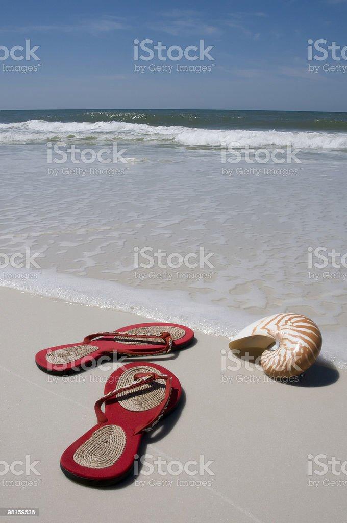 앵무조개 섈 및 샌들 해변 royalty-free 스톡 사진