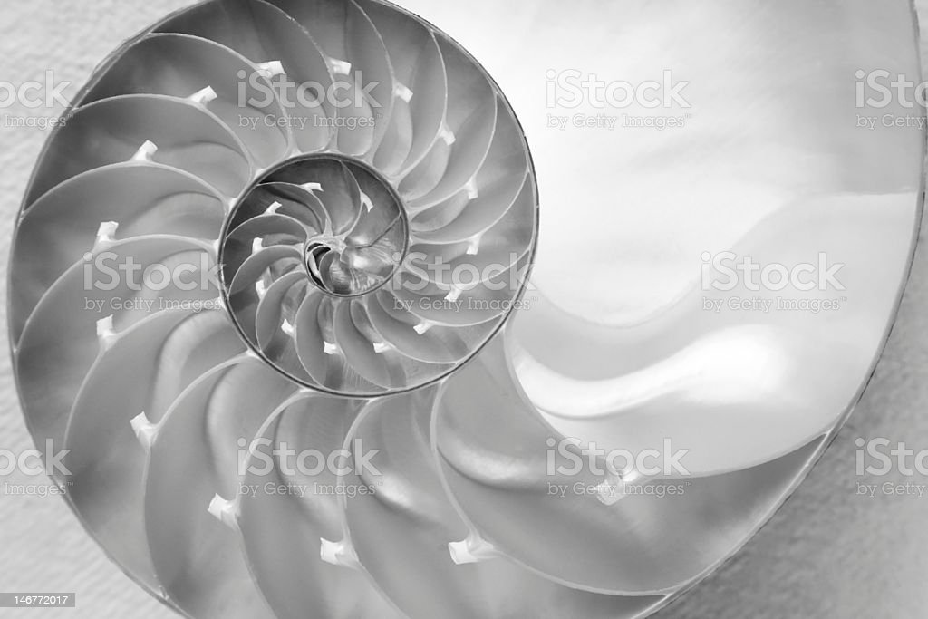 Nautilus Shell Black & White stock photo