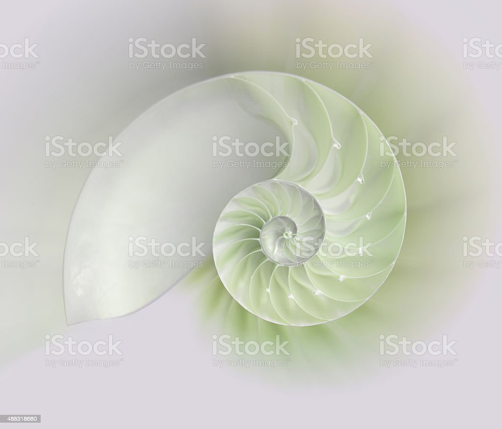 Nautilus shell cut stock photo