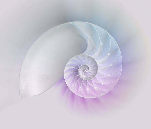 nautilus shell cut - nautilus stock pictures, royalty-free photos & images
