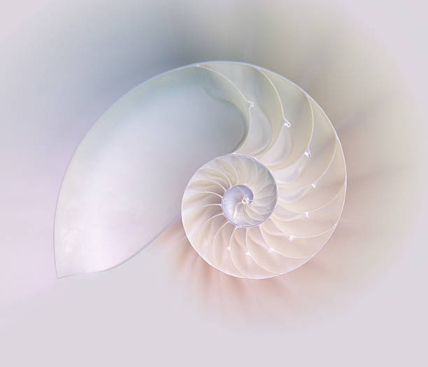 Nautilus shell cut stock photo