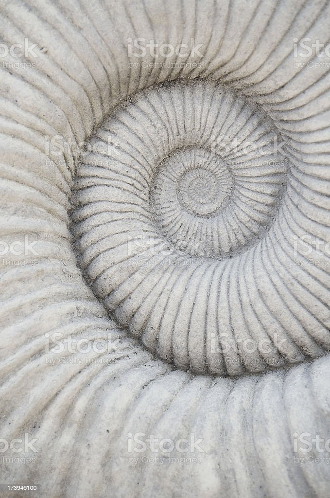 Nautilus Shell Fossil Natural Pattern Background royalty-free stock photo