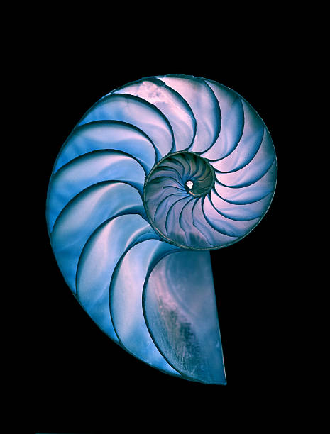 nautilus shell - great detailed shot - nautilus stock pictures, royalty-free photos & images