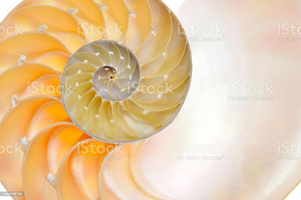 nautilus shell isolated on white background stock photo