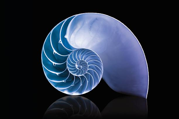nautilus shell mathematical spiral with blue overlay duotone - nautilus stock pictures, royalty-free photos & images