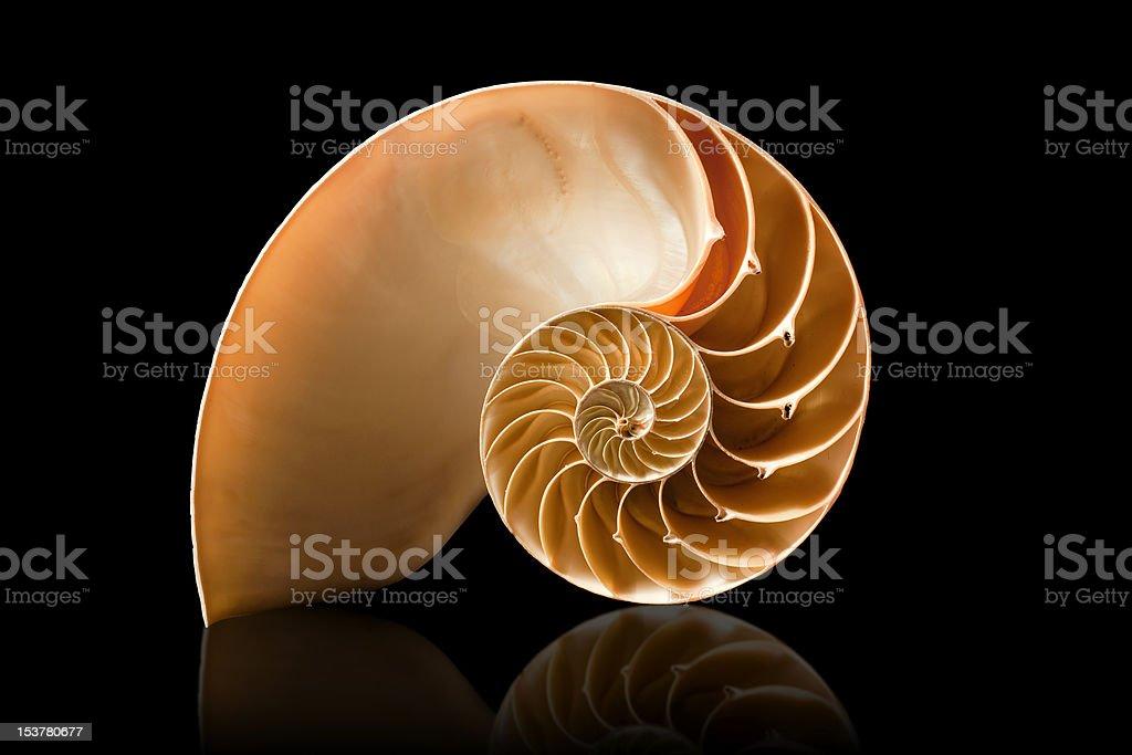 Nautilus shell on black background stock photo