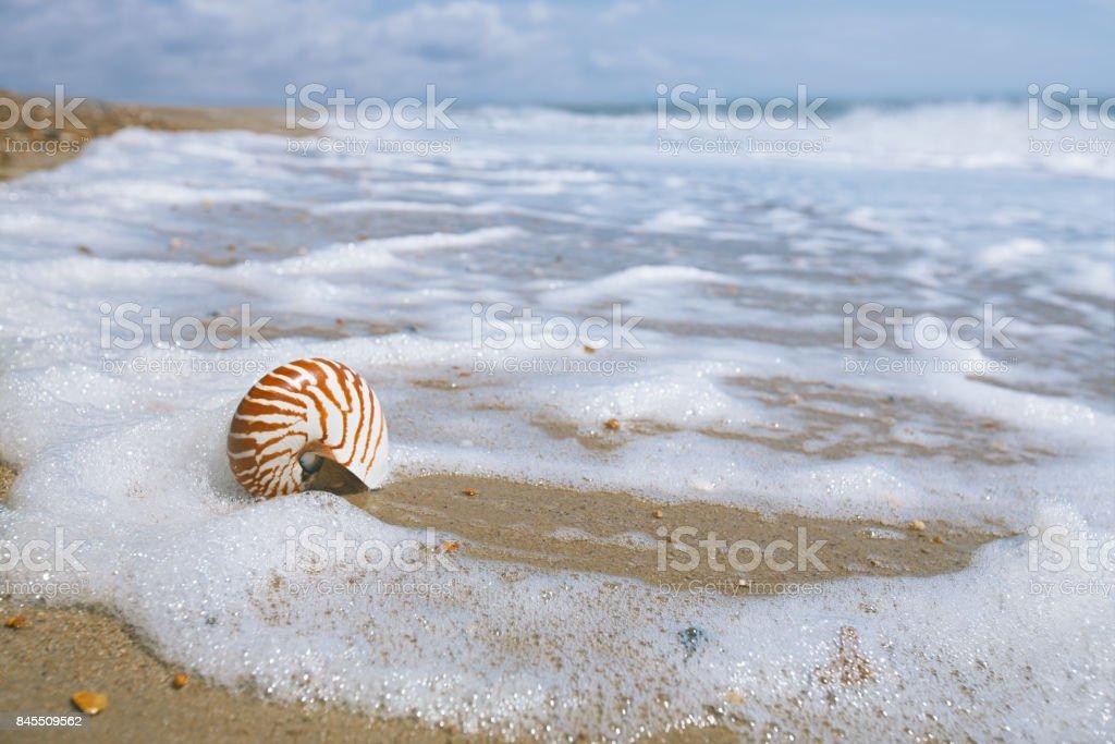 nautilus shell on peblle beach stock photo