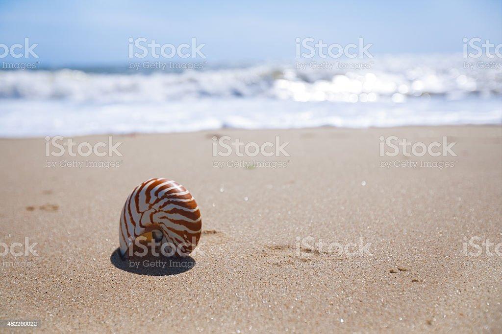 nautilus shell on sand beach and sea waves stock photo