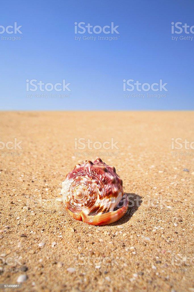 Nautilus shell on sand royalty-free stock photo