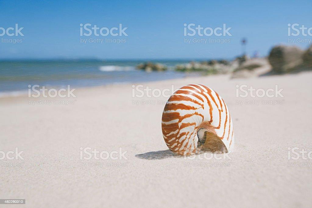 nautilus shell on sandy wind beach stock photo