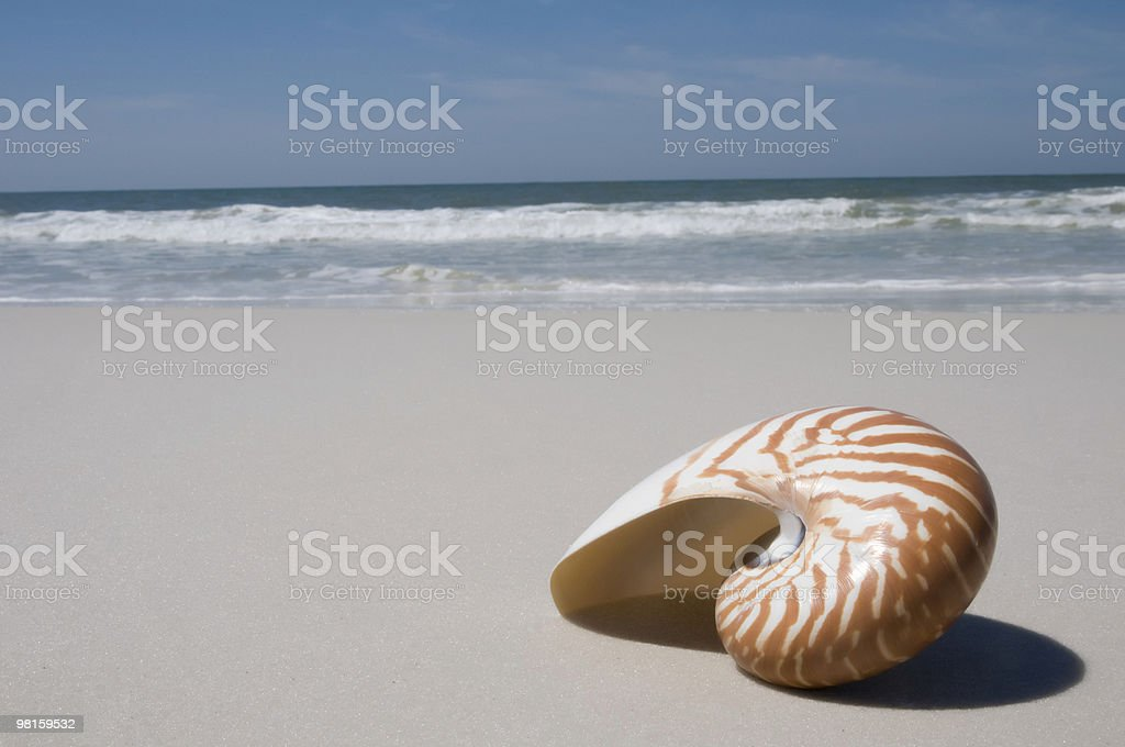 Nautilus Shell on the Beach royalty-free stock photo