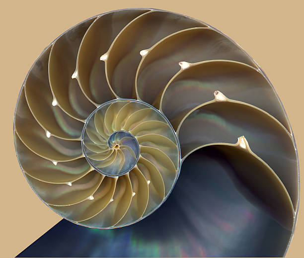 nautilus shell pattern - nautilus stock pictures, royalty-free photos & images