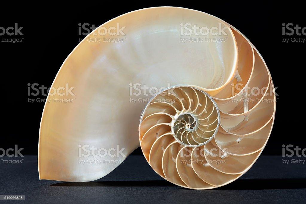 Nautilus shell, perfect Fibonacci pattern on black stock photo