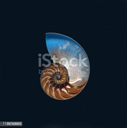 Nautilus Shell onblack background