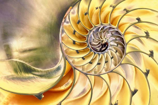 鸚鵡螺殼牌 - 重複螺旋型 個照片及圖片檔
