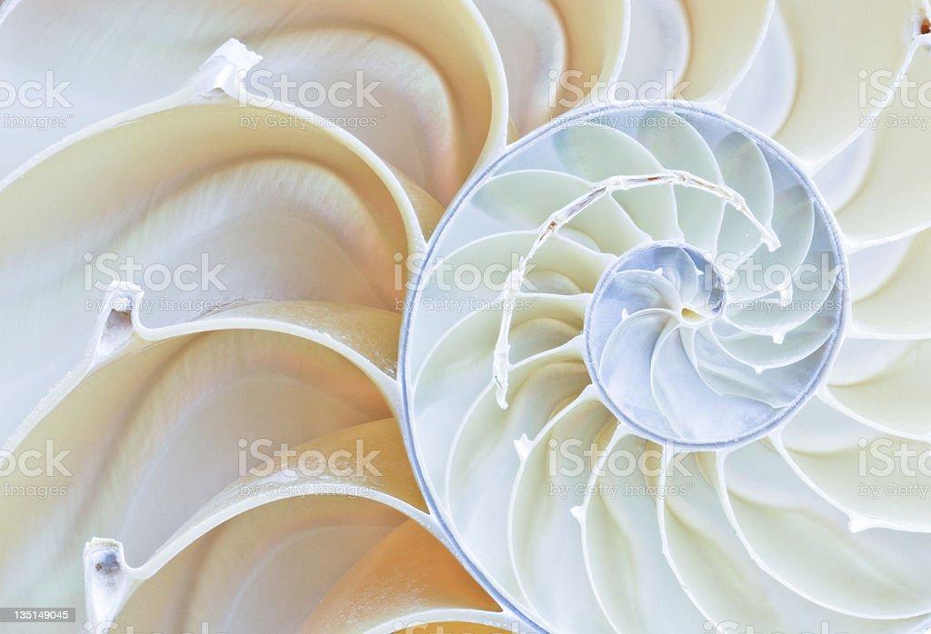 nautilus-shell Lizenzfreies stock-foto