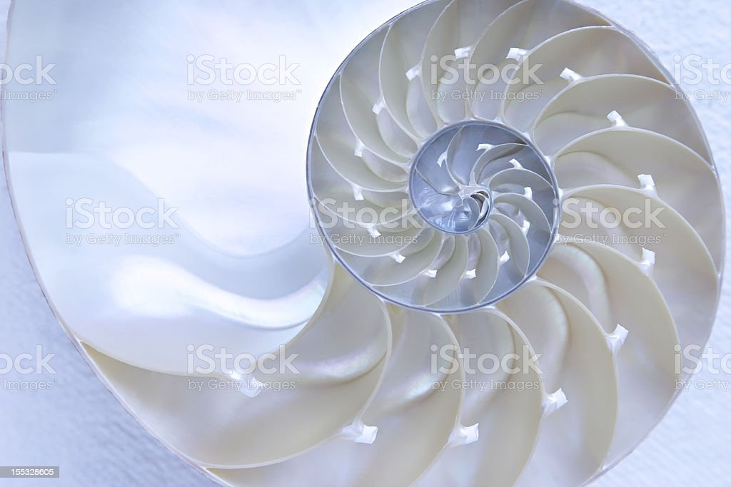 Nautilus Shell stock photo