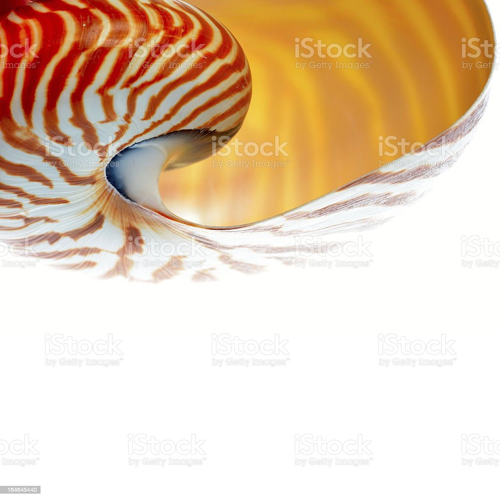 nautilus shell royalty-free stock photo