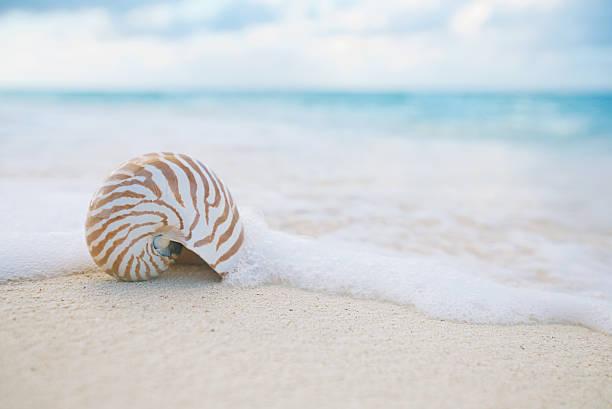 nautilus shell sea waves, live action ... stock photo
