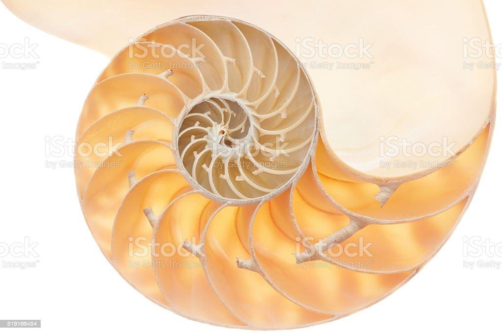 Nautilus shell section, perfect Fibonacci pattern on white stock photo