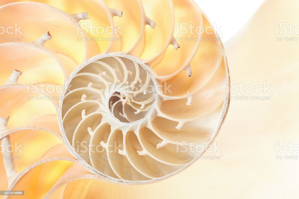 Nautilus shell section, perfect pattern background stock photo