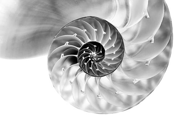 nautilus shell section - nautilus stock pictures, royalty-free photos & images
