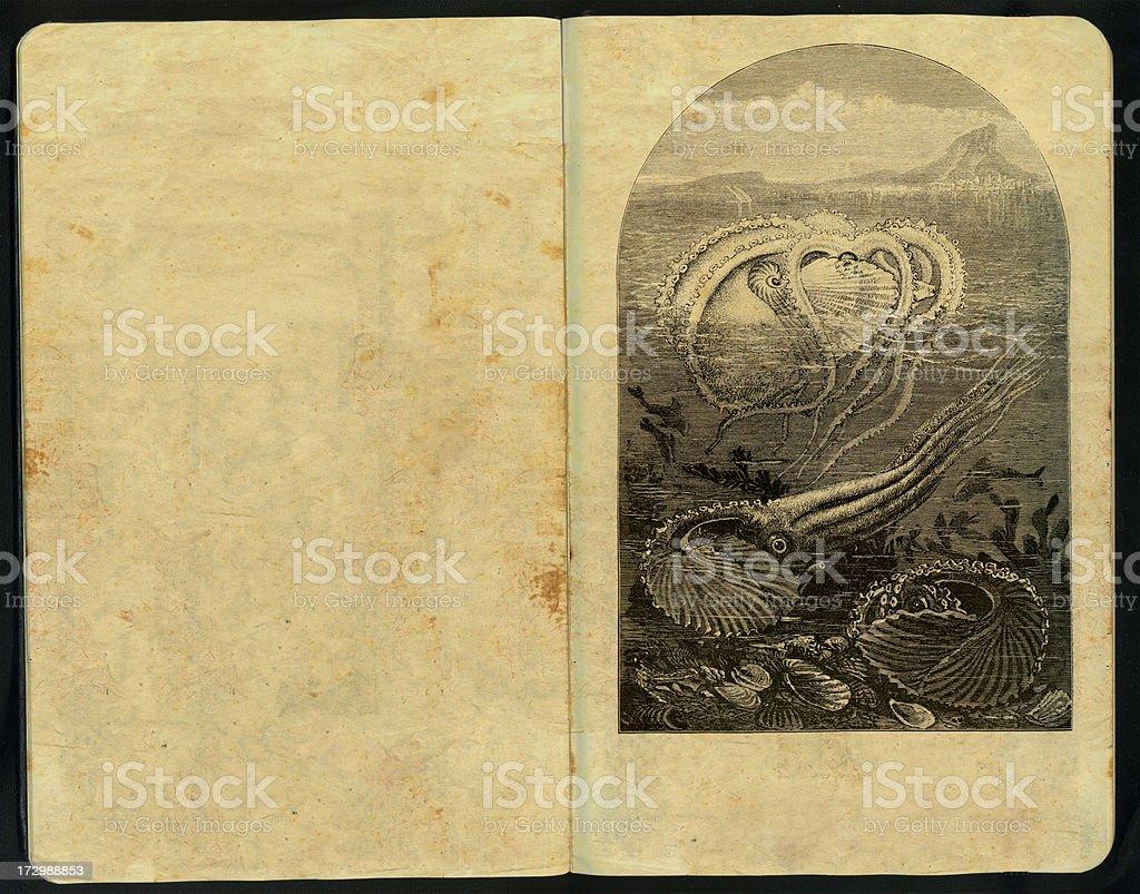 Nautilus Sketch Pad royalty-free stock photo