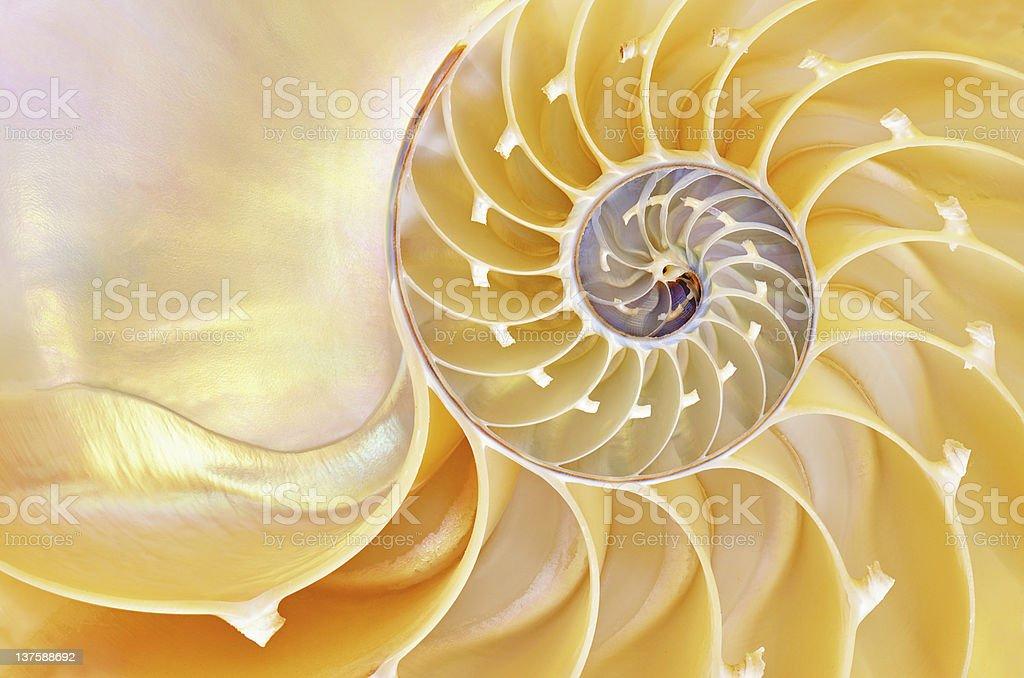 Nautius Shell - Royalty-free Abstract Stock Photo