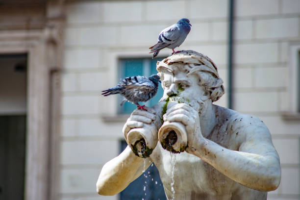 piazza navona-rom - baroque tattoo stock-fotos und bilder