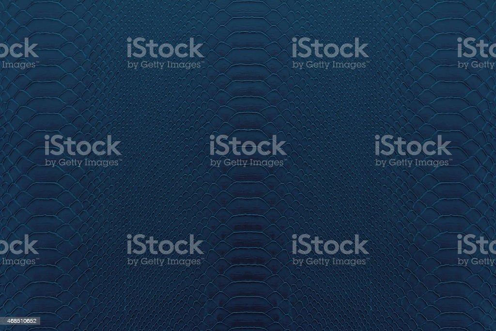 navy blue reptile stock photo