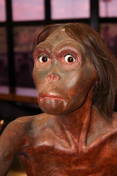neanderthal - hair grow cyclus stockfoto's en -beelden