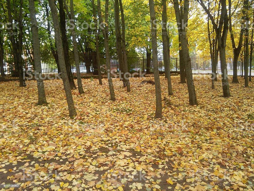 Near fence on autumn stock photo