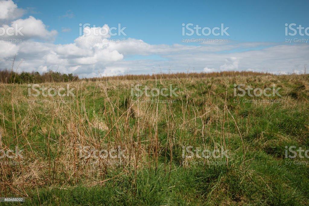 Near forest wildlife meadows Sutton Bank, North York Moors, Yorkshire, England stock photo