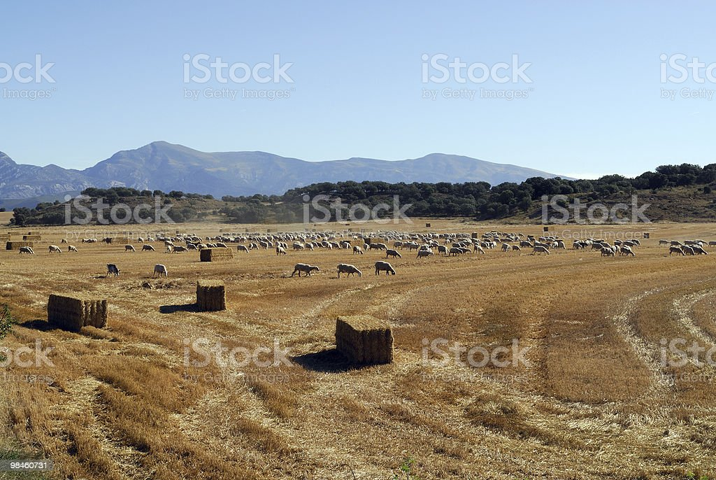 Near Huesca (Aragon, Spain) - Pastures and fields at summer royalty-free stock photo