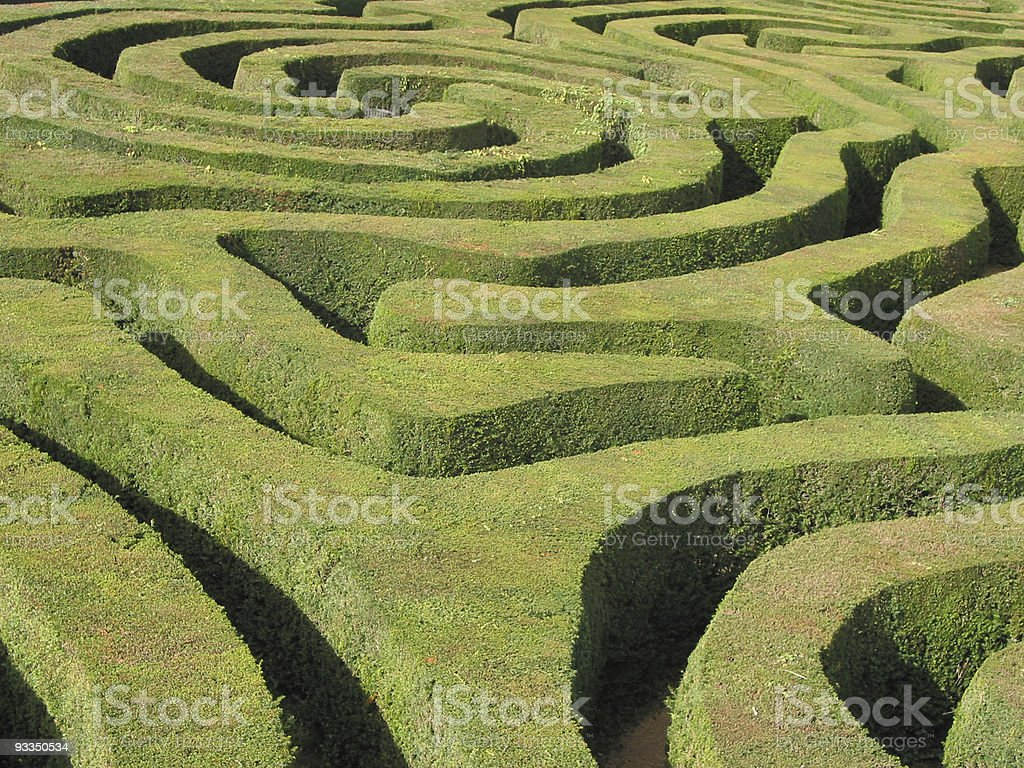 Neatly clipped swirling Hedge Maze in the sunshine stock photo