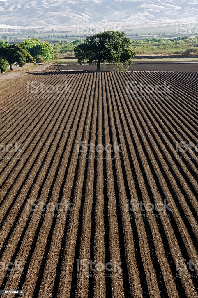 Neatly ploughed furrows in agricultural field in California Freshly planted farm field in Northern California. Agricultural Field Stock Photo