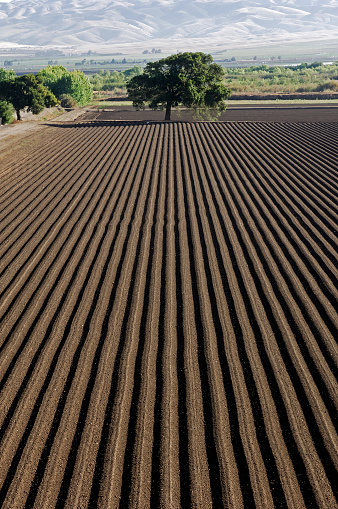 Neatly Ploughed Furrows In Agricultural Field In California Stock Photo - Download Image Now