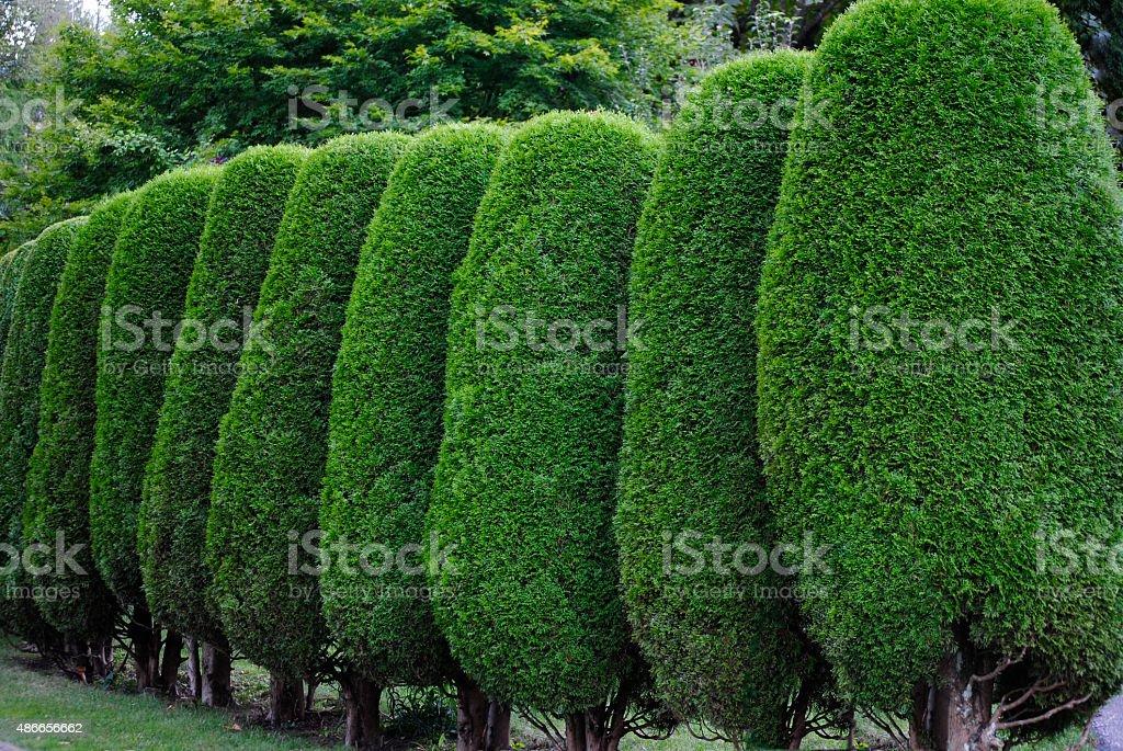 Neatly trimmed hedge Neatly trimmed hedge 2015 Stock Photo