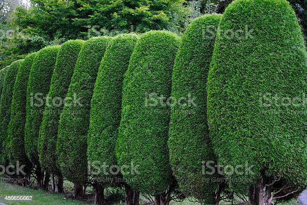 Neatly Trimmed Hedge Stock Photo - Download Image Now