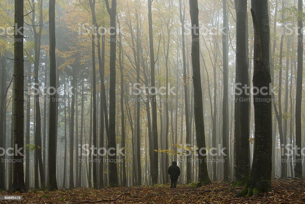 Im Nebel Herbstwald foto de stock libre de derechos