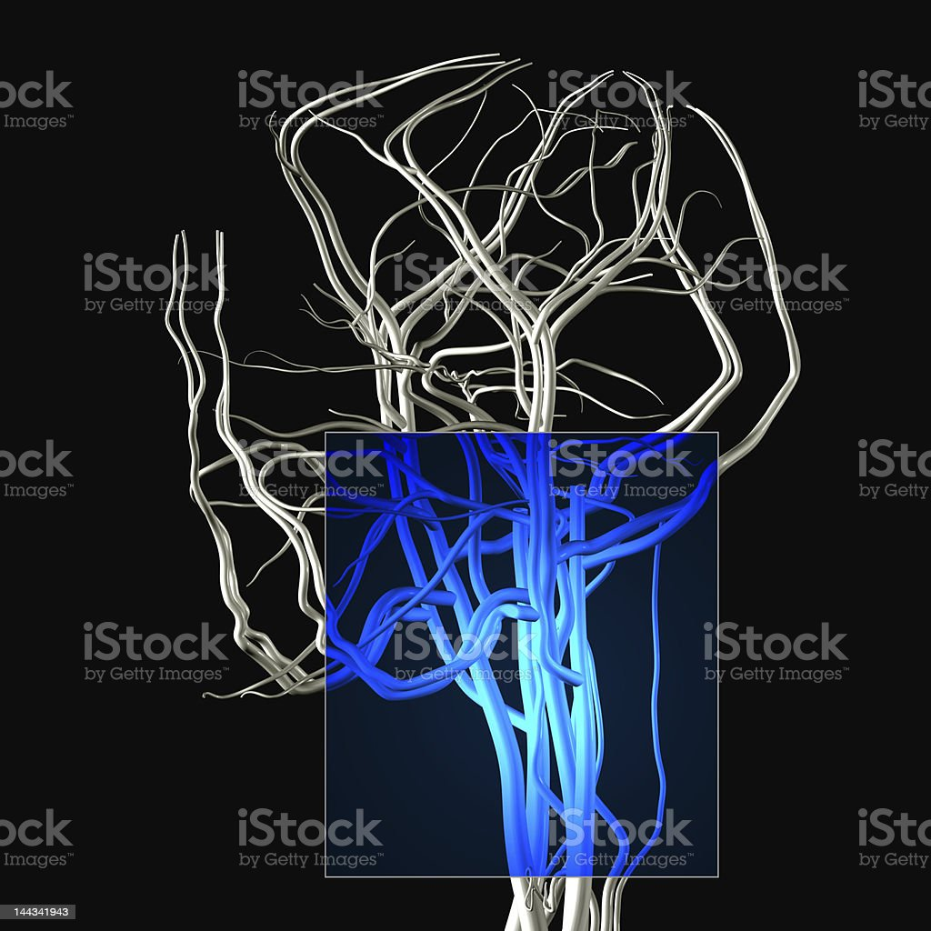 Neck and Jaw MRI royalty-free stock photo