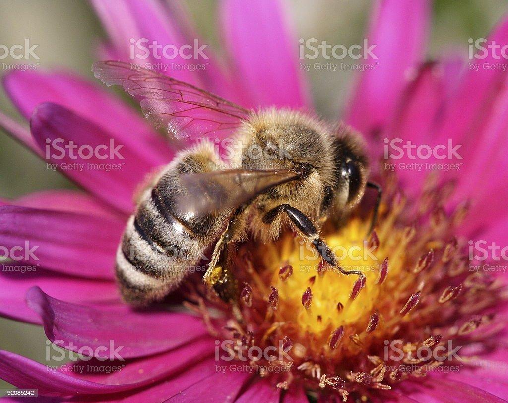 Nectar 2 royalty-free stock photo