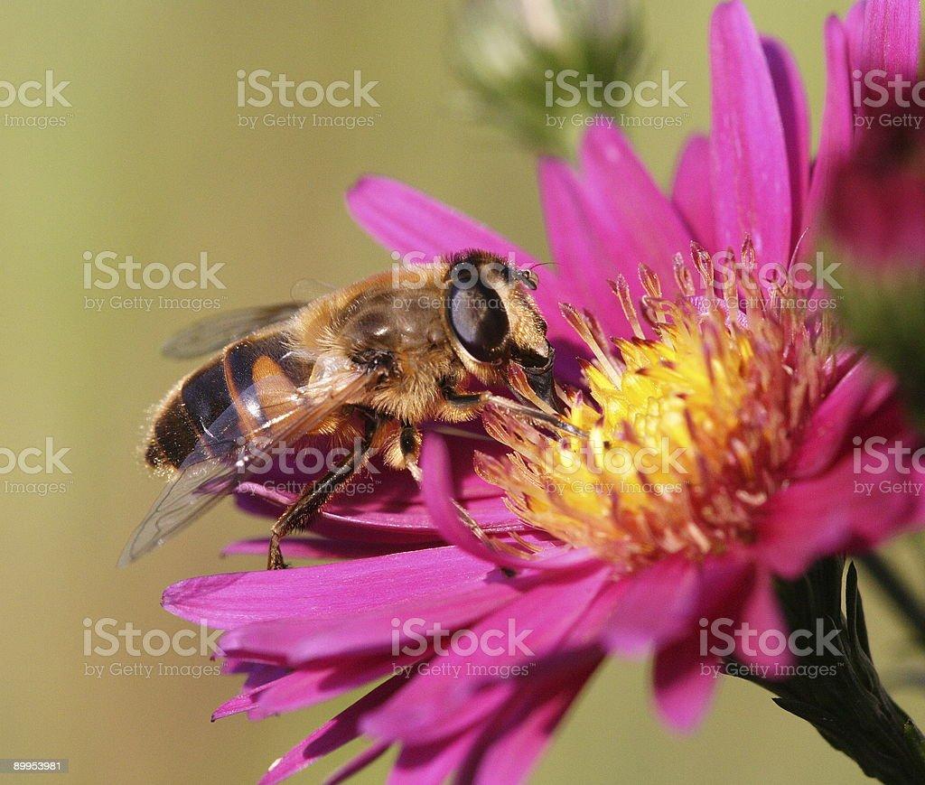 Nectar 3 royalty-free stock photo