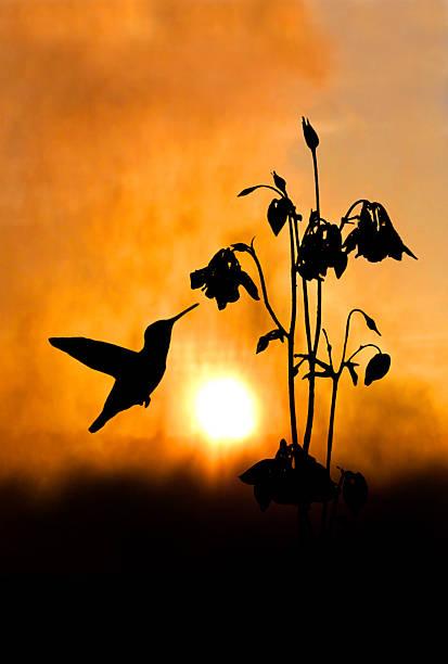 Nectar of Dawn stock photo