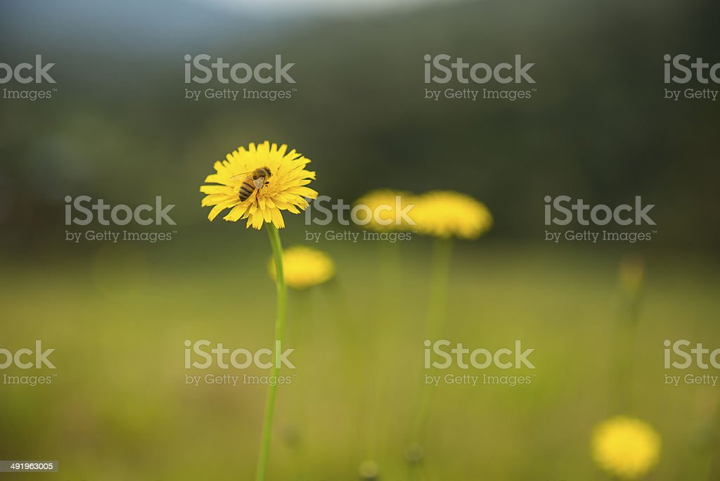 Nectar stock photo
