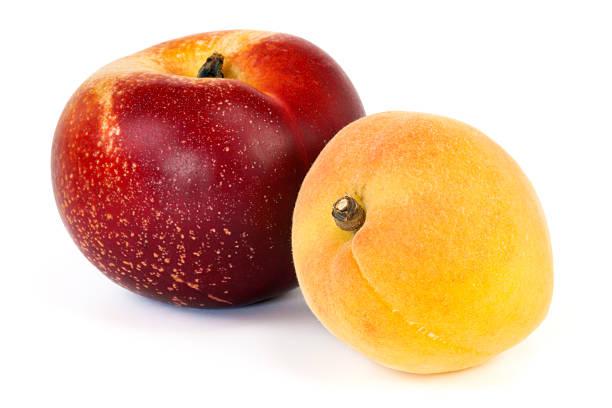 Nectarine and Apricot stock photo