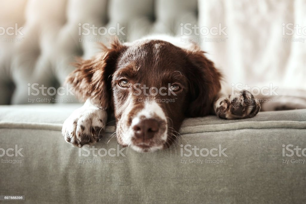 I need a hug right now! stock photo