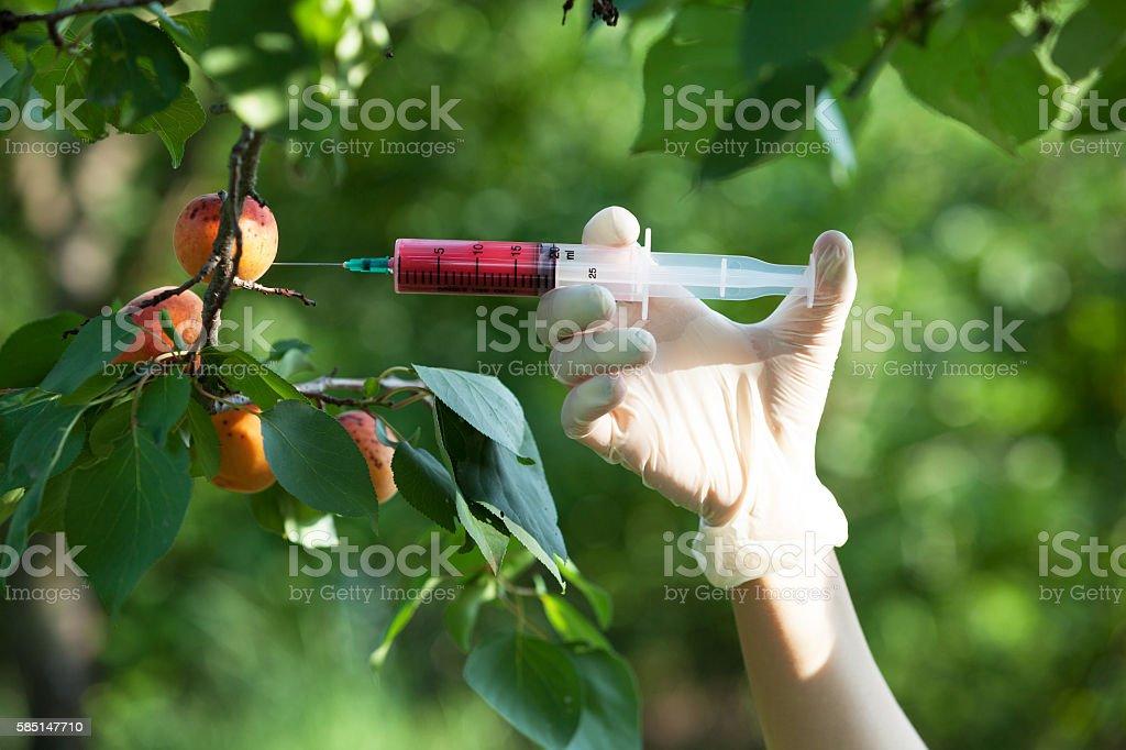 Needle and syringe injecting representing genetically modified fruit - foto de acervo